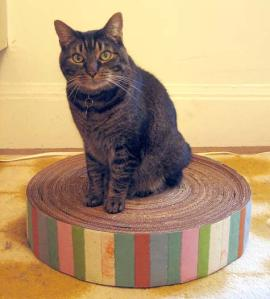 recycled-cardboard-cat-pad